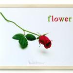 Volker Hildebrandt, flower, 2013, Digitaldruck, 30 x  40 cm