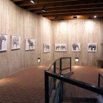Volker Hildebrandt, Elephants.Eyes, Galerie Epikur Wuppertal, 2007, hier Satelliten-Ausstellung im Zoo Wuppertal